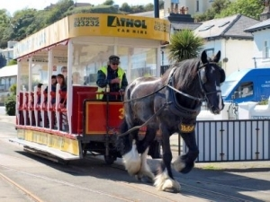 Horse tram service back on track for 2015